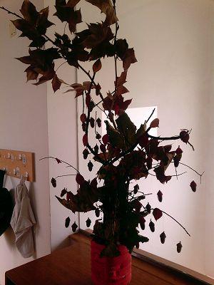 Boas Vindas ao Outono (4)