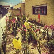 O nosso jardim…